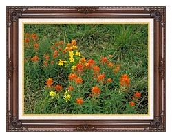 U S Fish And Wildlife Service Prairie Paintbrush canvas with dark regal wood frame