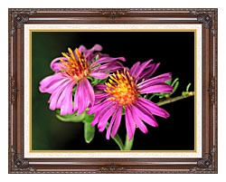 U S Fish And Wildlife Service Silky Aster canvas with dark regal wood frame