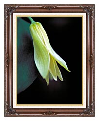 U S Fish And Wildlife Service Small Flowered Bellwort canvas with dark regal wood frame