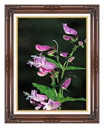U S Fish And Wildlife Service Smalls Beardtounge canvas with dark regal wood frame