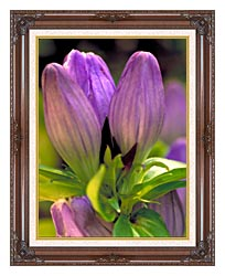 U S Fish And Wildlife Service Soapwort Gentian canvas with dark regal wood frame
