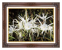 U S Fish And Wildlife Service Spider Lily canvas with dark regal wood frame