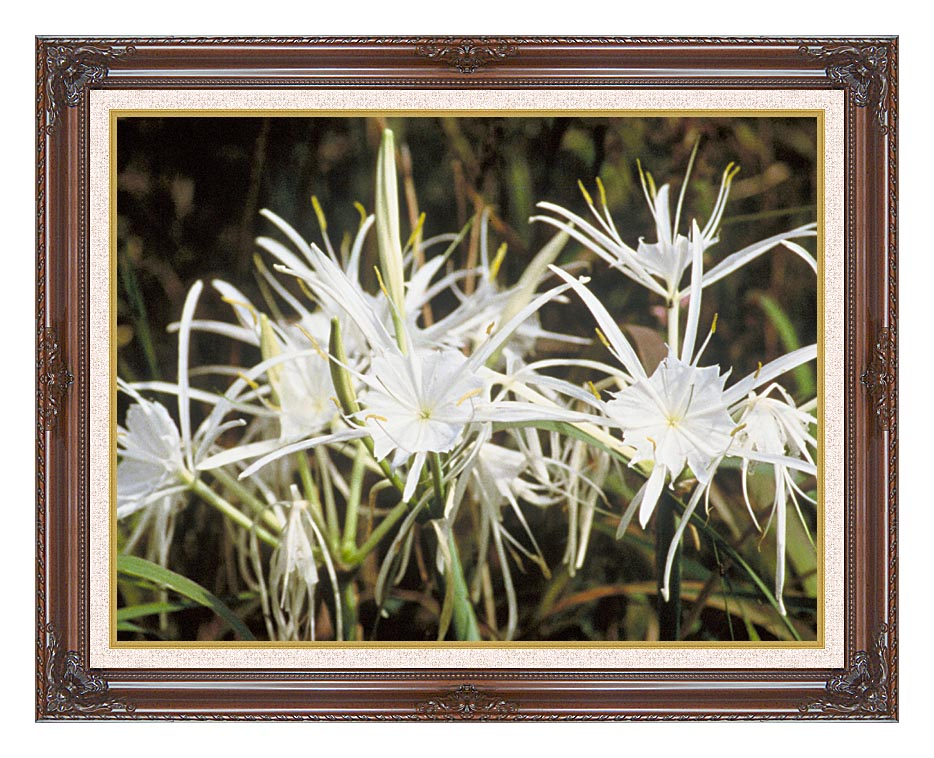 U S Fish and Wildlife Service Spider Lily with Dark Regal Frame w/Liner