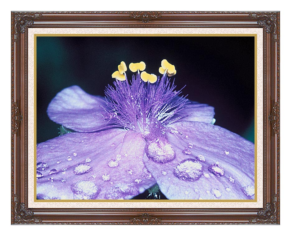 U S Fish and Wildlife Service Spider Wort Flower Art with Dark Regal Frame w/Liner