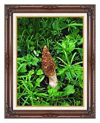 U S Fish And Wildlife Service Sponge Mushroom canvas with dark regal wood frame