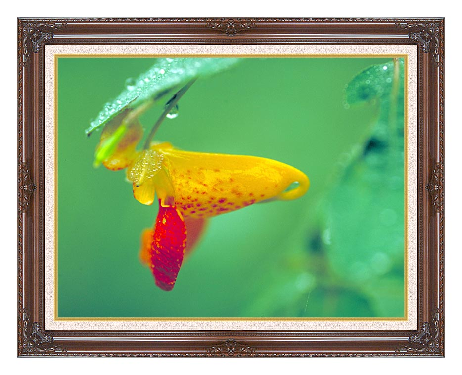 U S Fish and Wildlife Service Spotted Jewelweed with Dark Regal Frame w/Liner