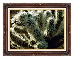 U S Fish And Wildlife Service Teddy Bear Cholla Cactus canvas with dark regal wood frame