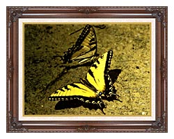 U S Fish And Wildlife Service Tiger Swallowtail Butterfly canvas with dark regal wood frame