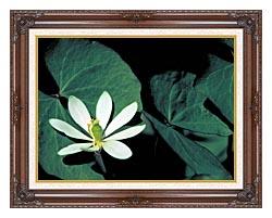 U S Fish And Wildlife Service Twinleaf canvas with dark regal wood frame