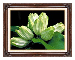 U S Fish And Wildlife Service White Gentian canvas with dark regal wood frame