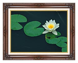 U S Fish And Wildlife Service White Water Lily canvas with dark regal wood frame