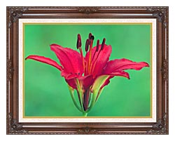 U S Fish And Wildlife Service Wood Lily canvas with dark regal wood frame