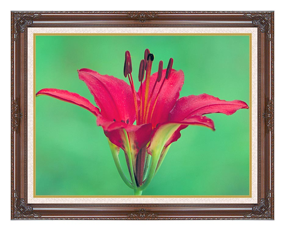 U S Fish and Wildlife Service Wood Lily with Dark Regal Frame w/Liner