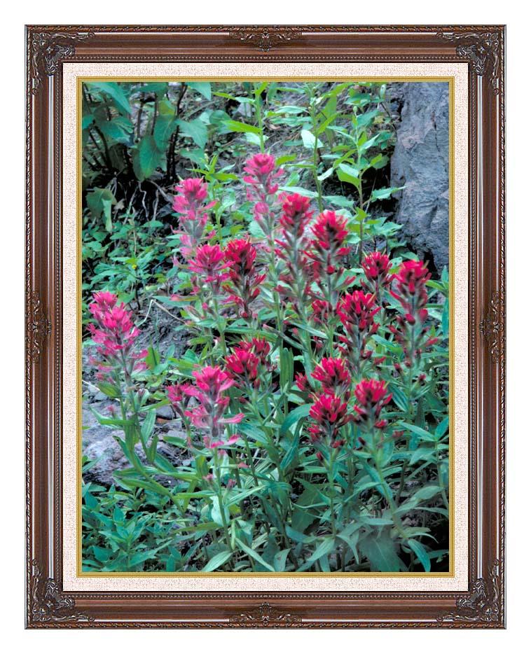 U S Fish and Wildlife Service Wyoming Paintbrush with Dark Regal Frame w/Liner