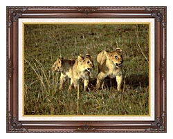 U S Fish And Wildlife Service African Lion Cubs canvas with dark regal wood frame