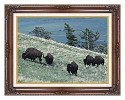 U S Fish And Wildlife Service Rocky Mountain Bison canvas with dark regal wood frame
