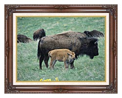 U S Fish And Wildlife Service Bison Cow And Calf canvas with dark regal wood frame