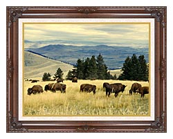 U S Fish And Wildlife Service Bison Herd canvas with dark regal wood frame