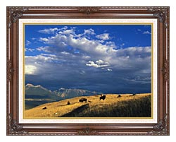 U S Fish And Wildlife Service Buffalo On The Range canvas with dark regal wood frame
