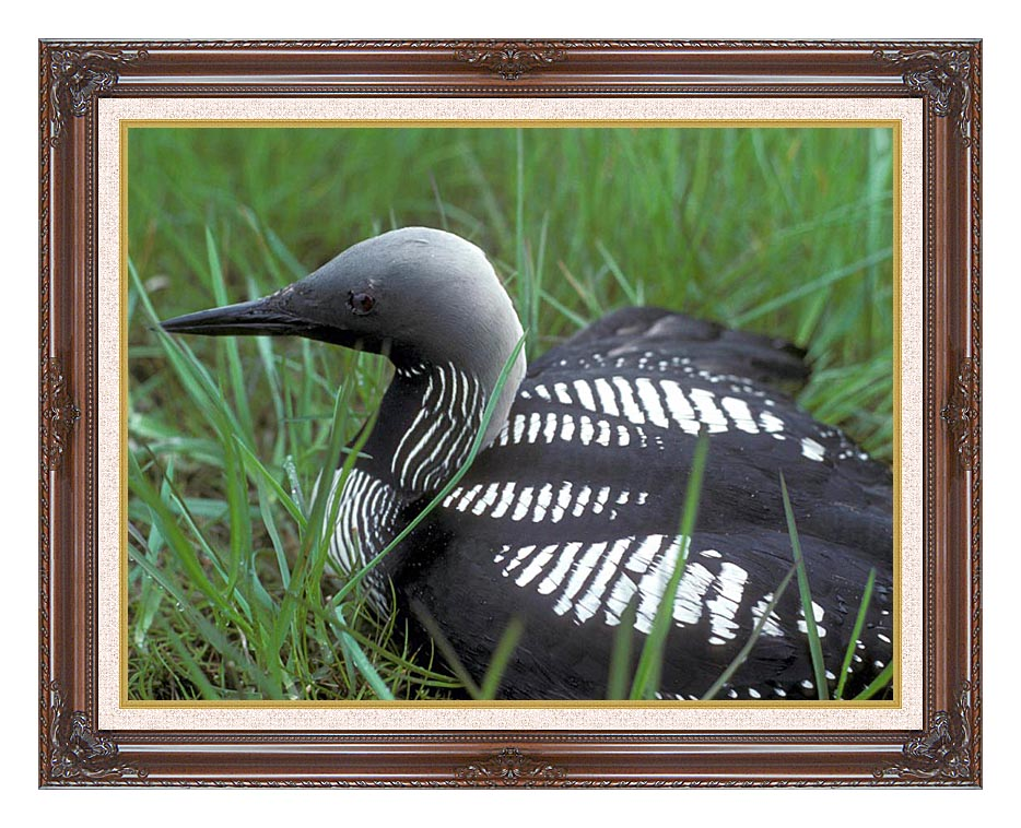 U S Fish and Wildlife Service Artic Loon with Dark Regal Frame w/Liner