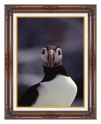 U S Fish And Wildlife Service Atlantic Puffin canvas with dark regal wood frame