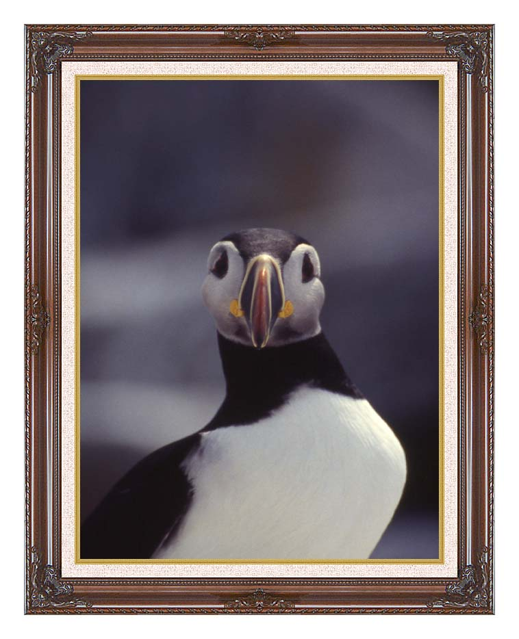 U S Fish and Wildlife Service Atlantic Puffin with Dark Regal Frame w/Liner