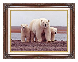 U S Fish And Wildlife Service Polar Bear Female With Cubs canvas with dark regal wood frame