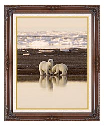 U S Fish And Wildlife Service Polar Bears canvas with dark regal wood frame