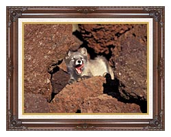 U S Fish And Wildlife Service Arctic Fox canvas with dark regal wood frame