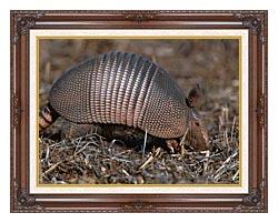 U S Fish And Wildlife Service Armadillo canvas with dark regal wood frame