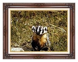 U S Fish And Wildlife Service Badger canvas with dark regal wood frame