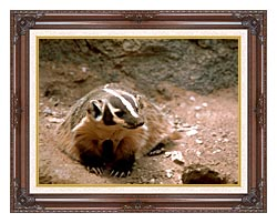 U S Fish And Wildlife Service Badger Art canvas with dark regal wood frame
