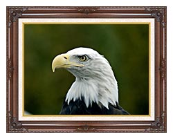 U S Fish And Wildlife Service U S A Bald Eagle canvas with dark regal wood frame