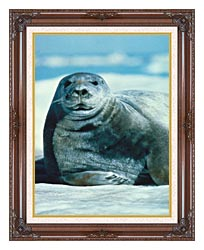 U S Fish And Wildlife Service Bearded Seal canvas with dark regal wood frame