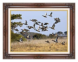 U S Fish And Wildlife Service Flock Of Waterfowl canvas with dark regal wood frame