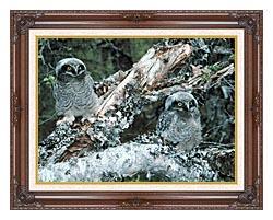 U S Fish And Wildlife Service Northern Hawk Owl Chicks canvas with dark regal wood frame