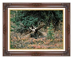 U S Fish And Wildlife Service Bull Moose canvas with dark regal wood frame
