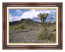 U S Fish And Wildlife Service Joshua Tree In The Desert canvas with dark regal wood frame