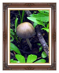 U S Fish And Wildlife Service Mica Cap Mushroom canvas with dark regal wood frame