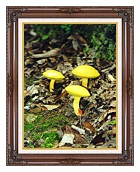 Ray Porter Yellow Bellys canvas with dark regal wood frame