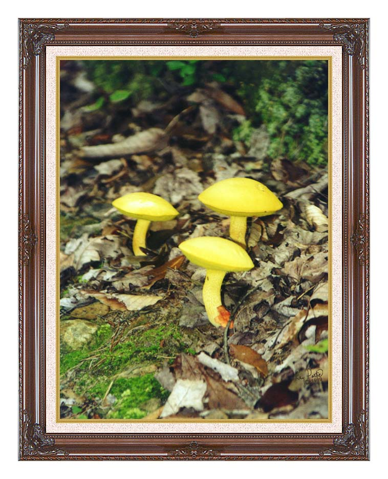 Ray Porter Yellow Bellys with Dark Regal Frame w/Liner