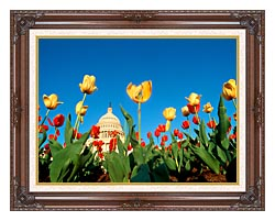 Visions of America Tulips In Spring With U S Capitol Building canvas with dark regal wood frame
