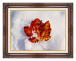 Visions of America Red Maple Leaf In Snow Acadia National Park Maine canvas with dark regal wood frame
