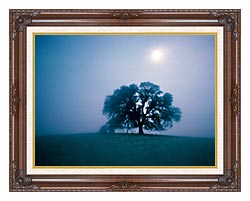 Visions of America Solitary Oak Tree On A Misty Morning California canvas with dark regal wood frame