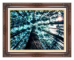 Visions of America Trees In Forest Saratoga New York canvas with dark regal wood frame