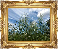 Brandie Newmon Wild Flower Field In Easthampton Massachusetts canvas with Majestic Gold frame