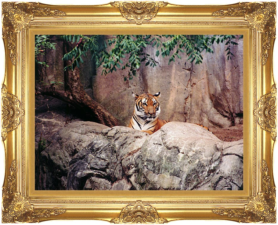 Brandie Newmon Tiger with Majestic Gold Frame