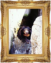 Brandie Newmon Sun Bear Cooling Off canvas with Majestic Gold frame
