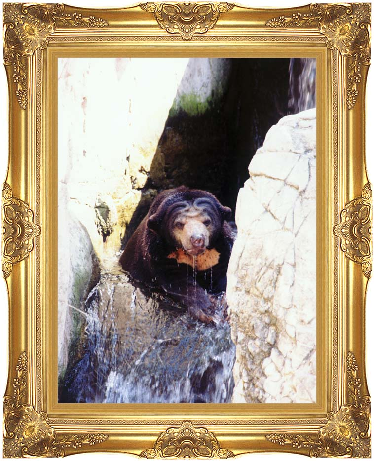 Brandie Newmon Sun Bear Cooling Off with Majestic Gold Frame