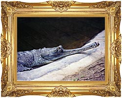 Brandie Newmon Gharial Crocodile canvas with Majestic Gold frame